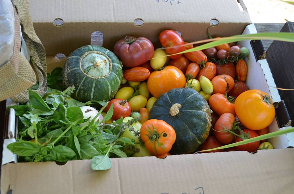 Produce Box filled to the brim